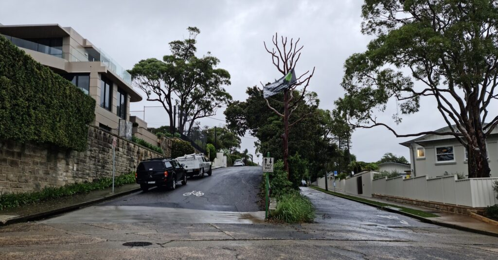 Vandalised Trees Mosman 1024x535 Mosman Council Goes For Sneaky Re Zoning Change That Could Cost Residents Millions